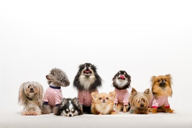 飼えるペットの種類や頭数には決まりがある