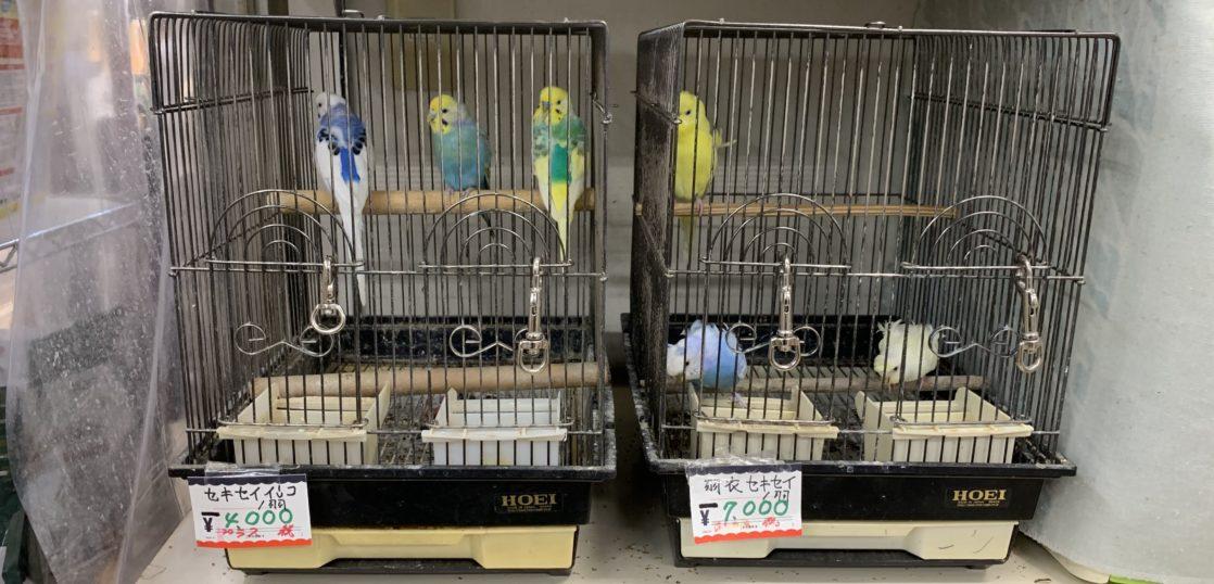 鈴木鳥獣店,自由が丘,自由が丘ひかり街,ペットショップ,小鳥,インコ
